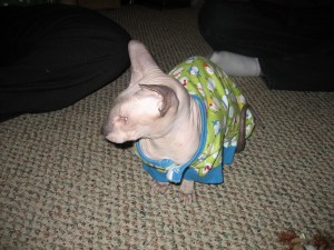 Mr. Mewton doesn't like his PJ's. Oh Well...