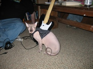 Rock band is not for kitties. (But let's not tell him.)